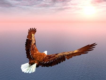 17451146 - sea eagle