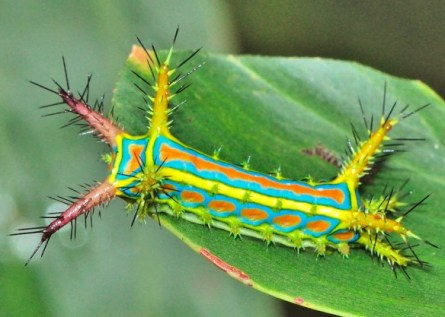the-world_s-top-10-most-amazing-caterpillars-5