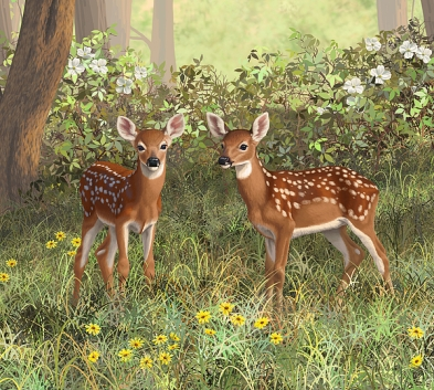 whitetail-deer-twin-fawns-crista-forest.jpg