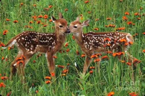 two-fawns-talking-chris-scroggins.jpg