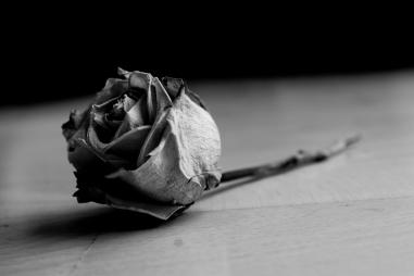 dead_rose_by_drawing_bloodlines.jpg