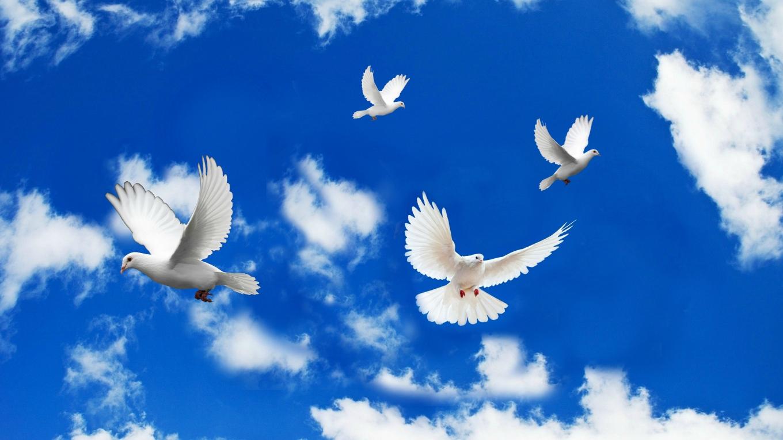 Beautiful-Dove-Birds-Images.jpg